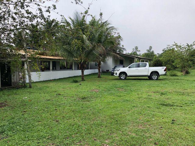 Vendo linda fazenda com 890 hectares na AM-010  liga os municípios de Manaus, Rio Preto  - Foto 13