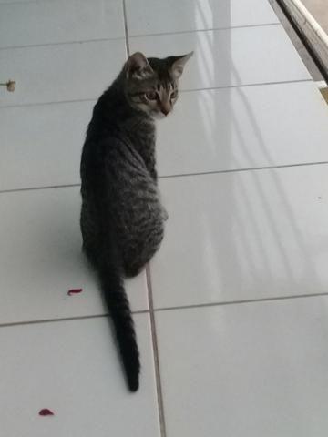 Doação de Gato - Foto 4