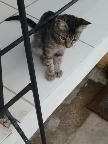 Doação de Gato - Foto 3