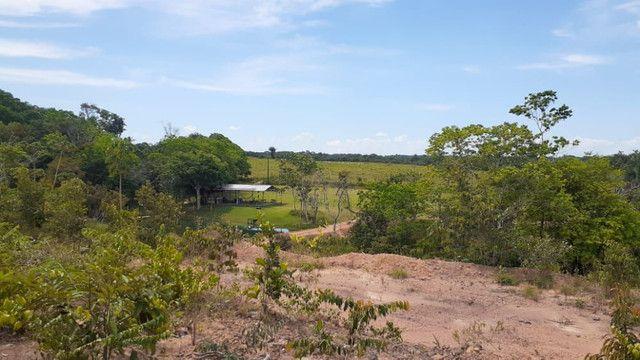 Terreno com uma casa, igarapé, campo, reservas - Foto 3