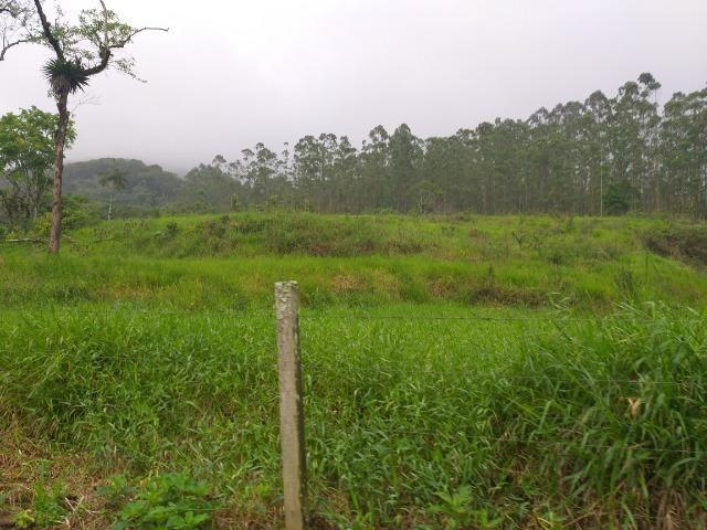 Sitio de 10 hectares no bairro baú em ilhota com plantação de eucalipto - Foto 11