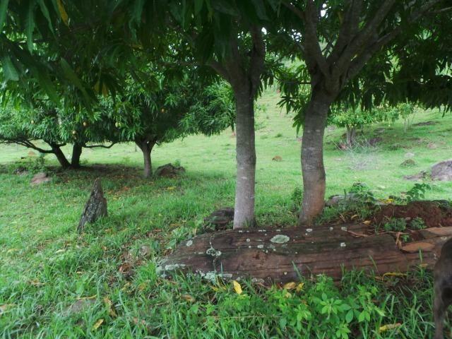 Fazenda 15 Alqueires Municipio Cocalzinho Aceita Imovel até 200 mil - Foto 18