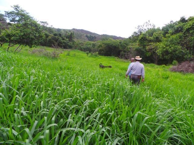 Fazenda 132 Alqueires Municipio Cocalzinho Aceita proposta - Foto 6