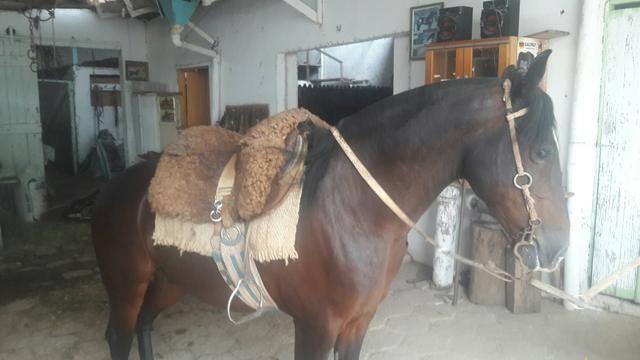 Cavalo Zaino - Foto 2