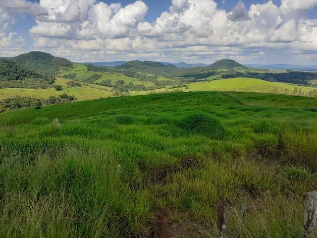 Fazenda Agricultura e Pecuária-Completa Arrendamento - Foto 4