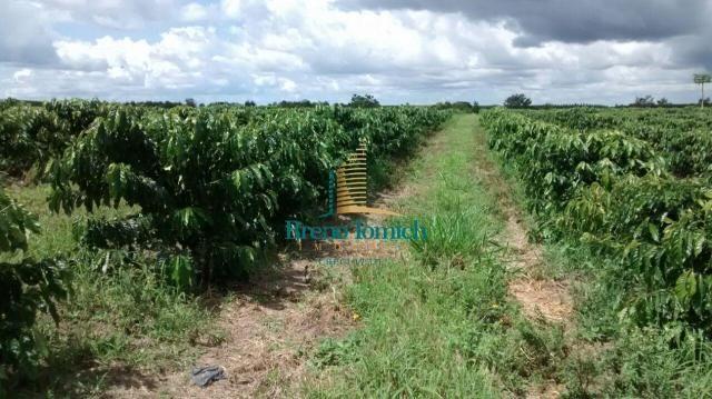 Fazenda à venda, 890000 m² por r$ 1.300.000 - teixeira do progresso - mascote/ba - Foto 14