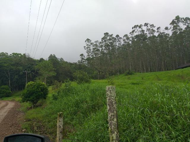 Sitio de 10 hectares no bairro baú em ilhota com plantação de eucalipto - Foto 18