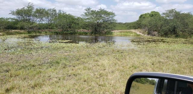 Fazenda com 80 hectares entre brejinho e santo Antônio do salto da onça - Foto 2