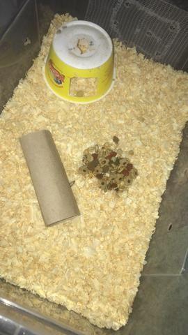 Ratinhos ótimo para crianças baixo custo - Foto 4