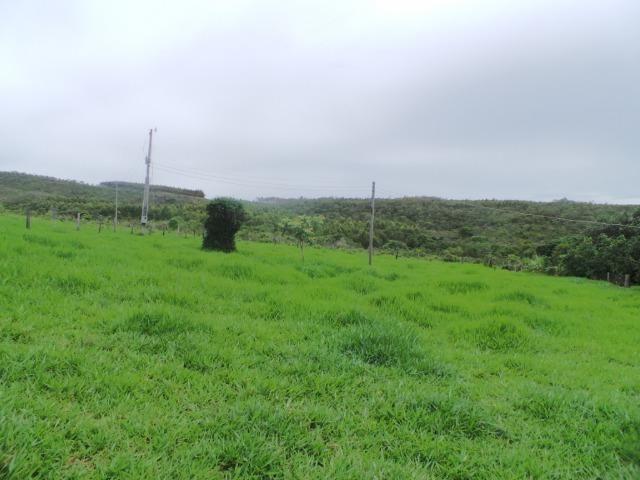 Fazenda 132 Alqueires Municipio Cocalzinho Aceita proposta - Foto 5