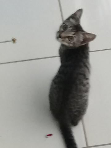 Doação de Gato - Foto 5