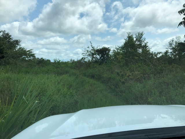 Vendo linda fazenda com 890 hectares na AM-010  liga os municípios de Manaus, Rio Preto  - Foto 5