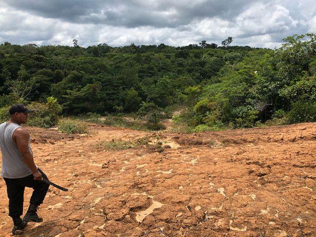 Vendo linda fazenda com 890 hectares na AM-010  liga os municípios de Manaus, Rio Preto  - Foto 11