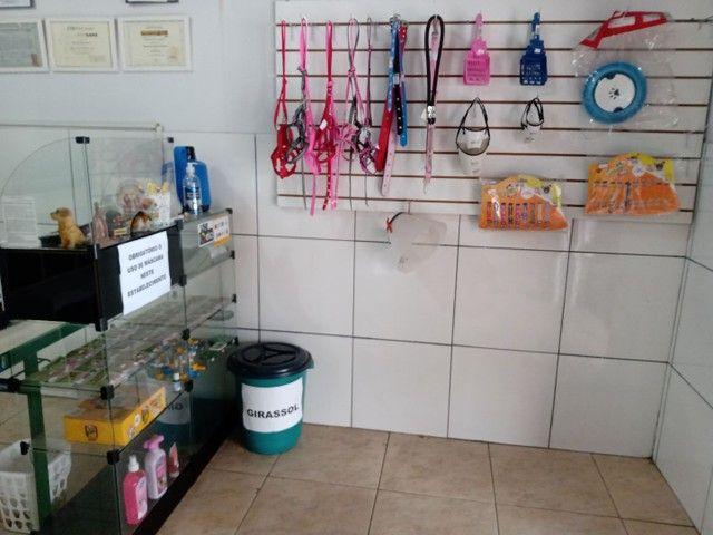 Pet shop - Foto 2