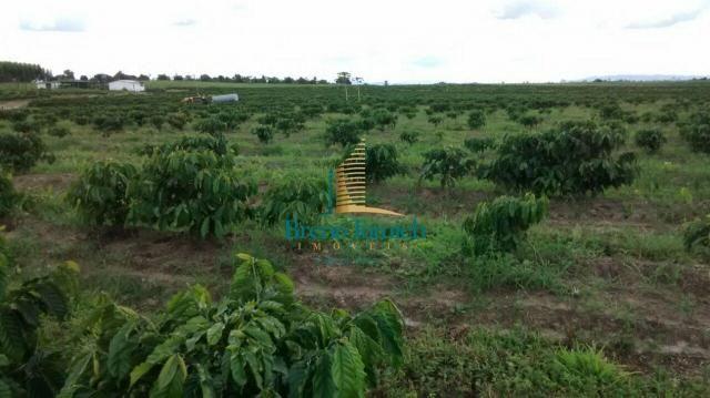 Fazenda à venda, 890000 m² por r$ 1.300.000 - teixeira do progresso - mascote/ba - Foto 18