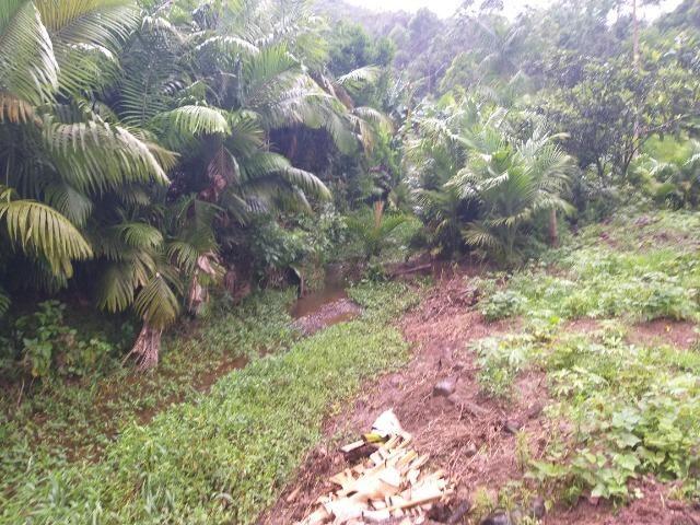 Sitio de 10 hectares no bairro baú em ilhota com plantação de eucalipto - Foto 15