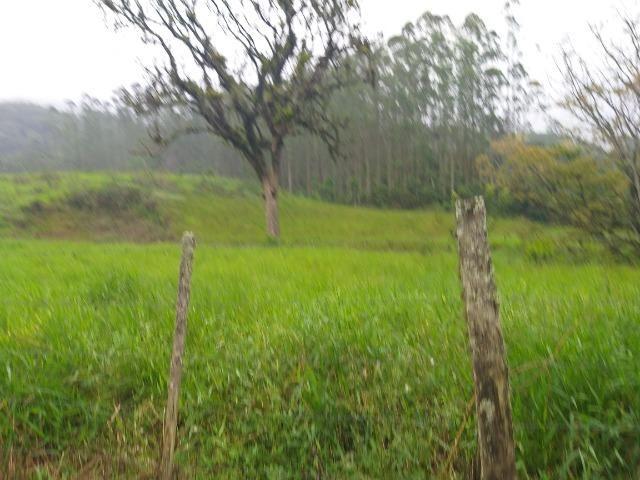 Sitio de 10 hectares no bairro baú em ilhota com plantação de eucalipto - Foto 7