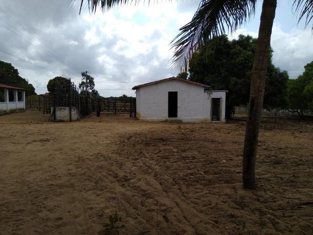 Granja com 4 há em bom jesus com 3 casas e outra em construção, piscina, galpão - Foto 7