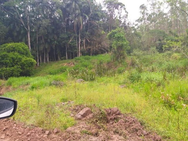 Sitio de 10 hectares no bairro baú em ilhota com plantação de eucalipto - Foto 17