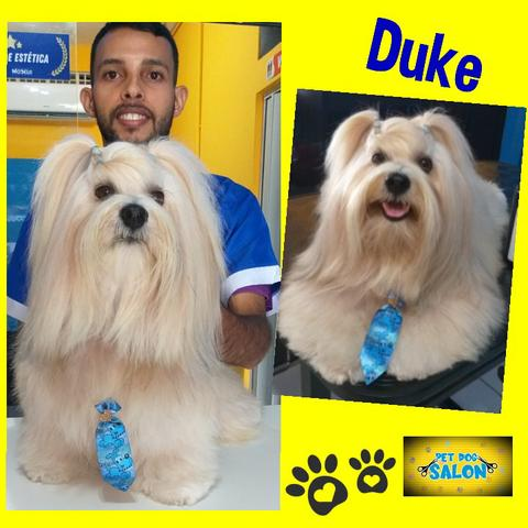 Pet dog salon - Foto 5