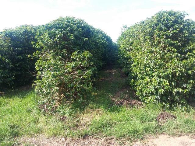Fazenda Café Sul de Minas - Foto 6