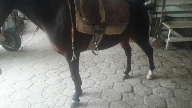 Cavalo Zaino - Foto 6