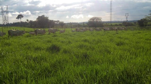 Fazenda 500 Alqueiro Aberto - Foto 4