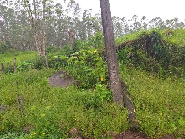 Sitio de 10 hectares no bairro baú em ilhota com plantação de eucalipto - Foto 20