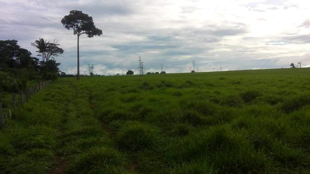 Fazenda 500 Alqueiro Aberto - Foto 5