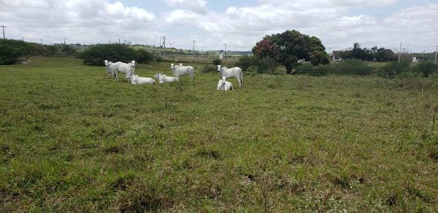 Fazenda com 80 hectares entre brejinho e santo Antônio do salto da onça - Foto 5