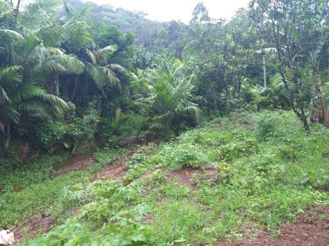 Sitio de 10 hectares no bairro baú em ilhota com plantação de eucalipto - Foto 19
