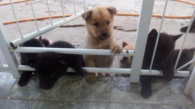 Vendo Filhotes - Foto 3