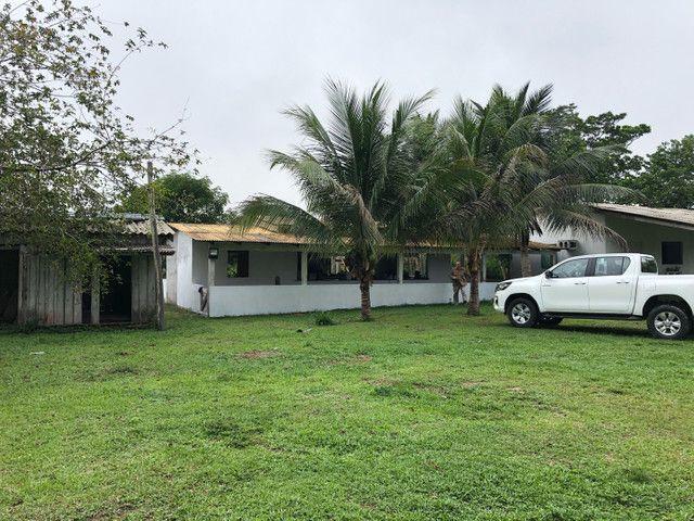 Vendo linda fazenda com 890 hectares na AM-010  liga os municípios de Manaus, Rio Preto  - Foto 15