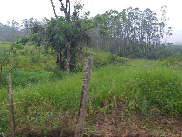 Sitio de 10 hectares no bairro baú em ilhota com plantação de eucalipto - Foto 13
