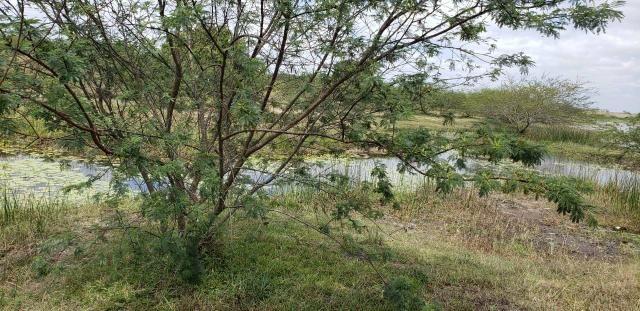 Fazenda com 80 hectares entre brejinho e santo Antônio do salto da onça - Foto 6