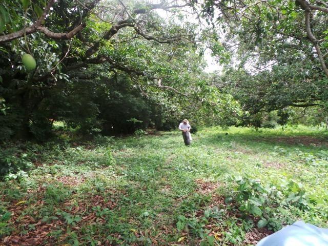 Fazenda 132 Alqueires Municipio Cocalzinho Aceita proposta - Foto 12