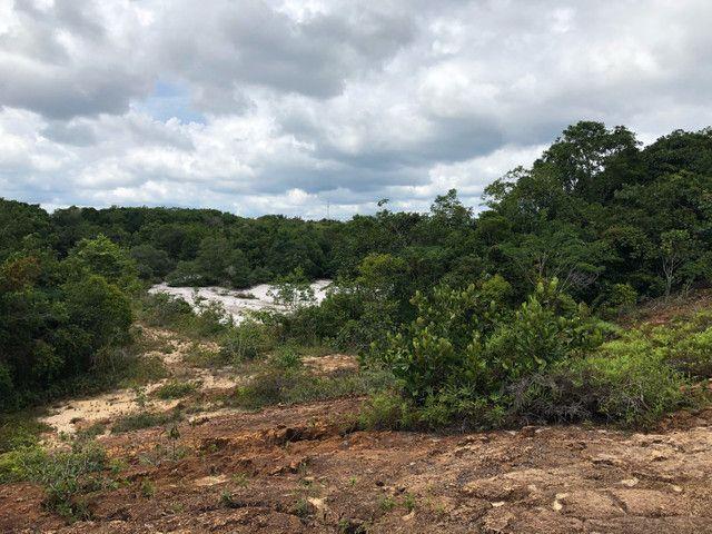 Vendo linda fazenda com 890 hectares na AM-010  liga os municípios de Manaus, Rio Preto  - Foto 12