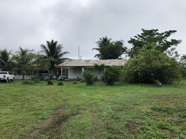 Vendo linda fazenda com 890 hectares na AM-010  liga os municípios de Manaus, Rio Preto  - Foto 9