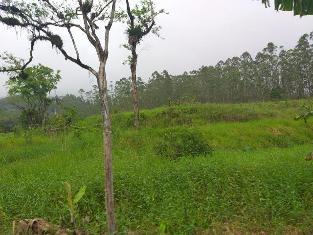 Sitio de 10 hectares no bairro baú em ilhota com plantação de eucalipto - Foto 9