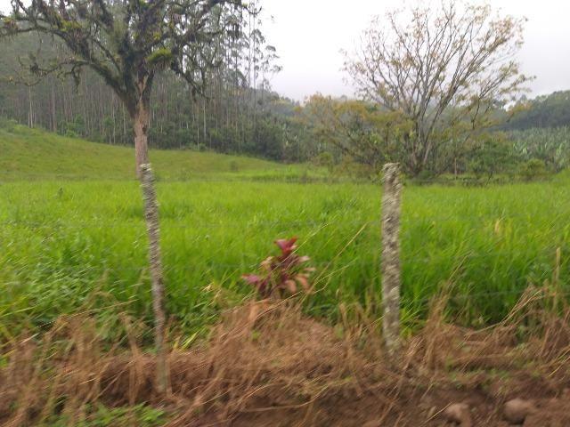 Sitio de 10 hectares no bairro baú em ilhota com plantação de eucalipto - Foto 14