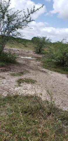 Fazenda com 80 hectares entre brejinho e santo Antônio do salto da onça