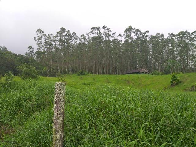 Sitio de 10 hectares no bairro baú em ilhota com plantação de eucalipto - Foto 4