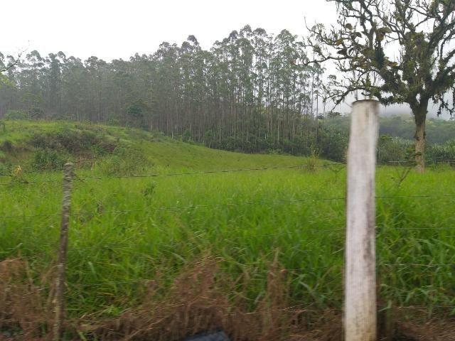 Sitio de 10 hectares no bairro baú em ilhota com plantação de eucalipto - Foto 8