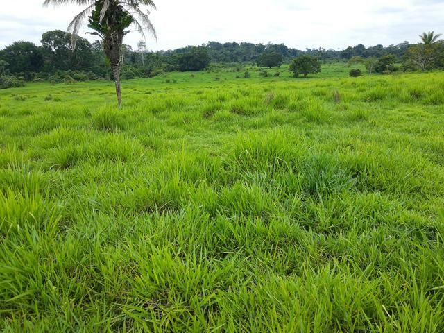 Corretor de terras em Rondônia