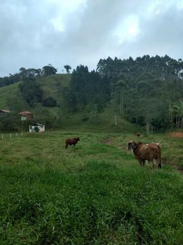 Oportunidade, sitio de 17.000 m² no Caetés interior de Camboriú 14 km da cidade por apenas - Foto 11