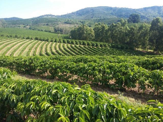 Fazenda Café Sul de Minas - Foto 15