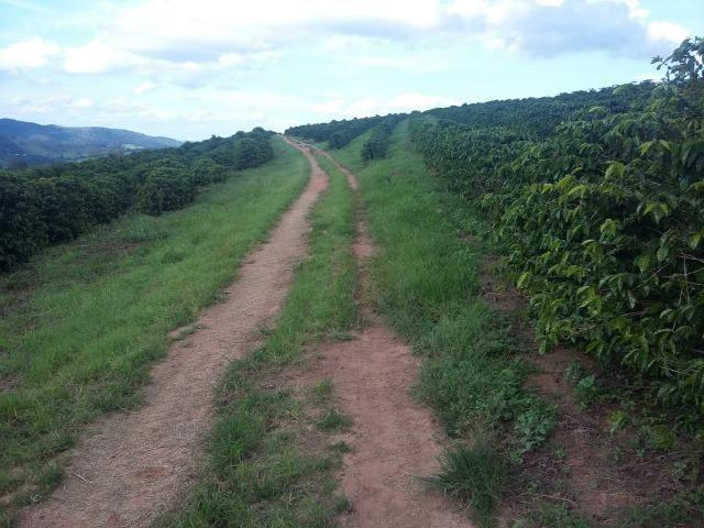 Fazenda Café Sul de Minas - Foto 13