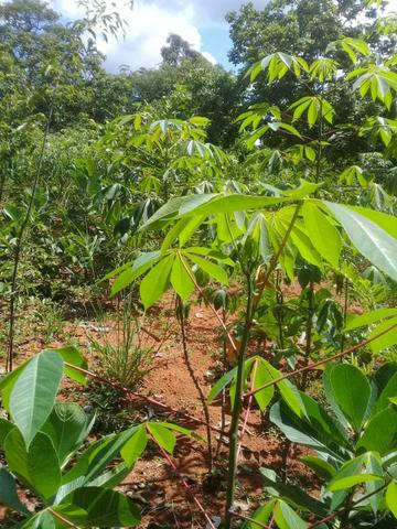 Vendo Chácara na Comunidade Rural de Extrema em Bocaiuva-Mg - Foto 7