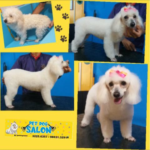 Pet dog salon - Foto 6