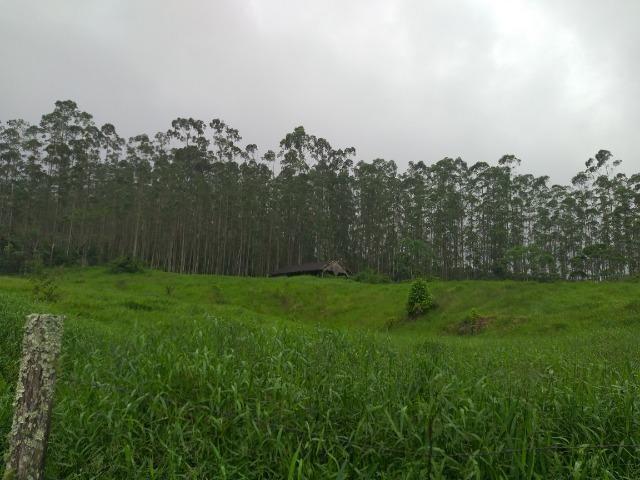 Sitio de 10 hectares no bairro baú em ilhota com plantação de eucalipto - Foto 5